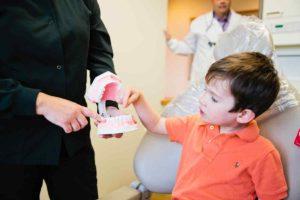 Child observing jaw model
